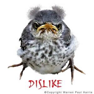 Winston-DISLIKE